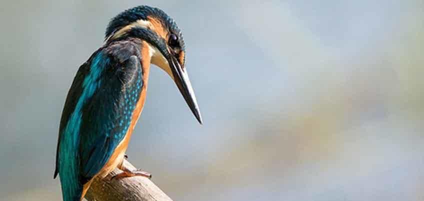 bird watching in nepal image